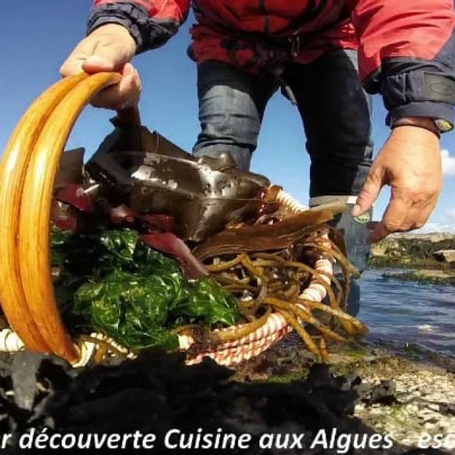 Sortie Et Atelier Cuisine Aux Algues Escapade Glas