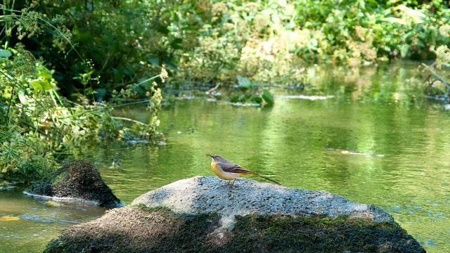 Ruisseau du Poulloguer