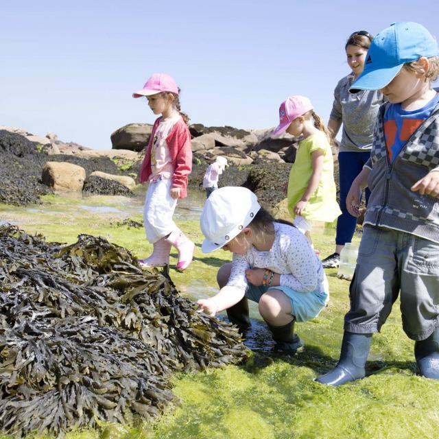 Sortie découverte plage à marée basse avec L'Aquarium Marin de Trégastel