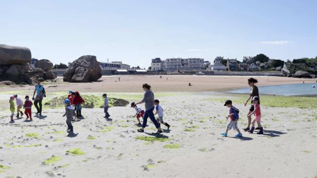 Sortie découverte : La plage à marée basse avec L'Aquarium Marin de Trégastel