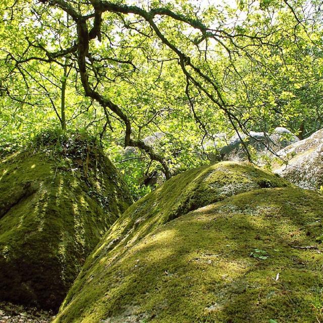 Vallée des Traouiéro à Trégastel