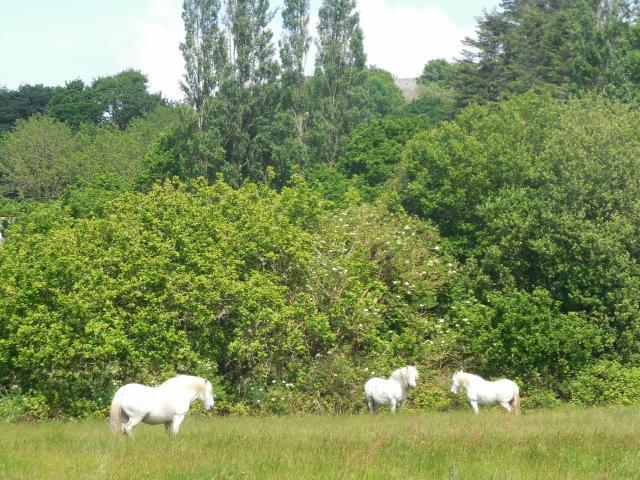 Chevaux Marais Trestel