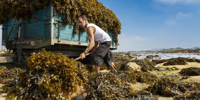 Cueilleur D'algues