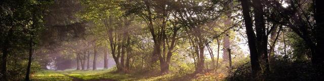 Forêt de Beffou