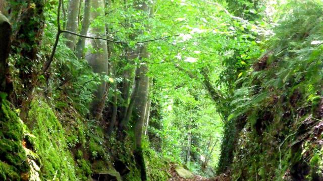 Plounerin Chemin Creux