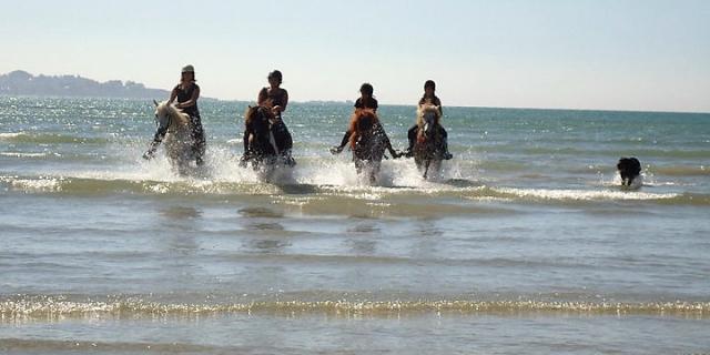 Balade à cheval en bord de mer avec la Ferme Equestre de Keropartz