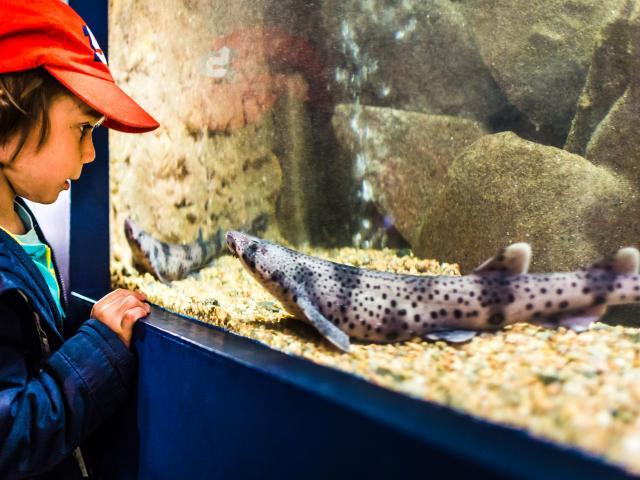 Aquarium Marin 2019.2