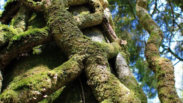 Réserve naturelle de Plounerin