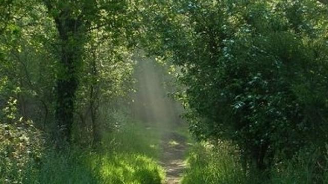 Bois De Lann Ar Waremm