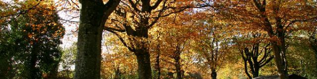 Bois De Lann Ar Waremm Automne